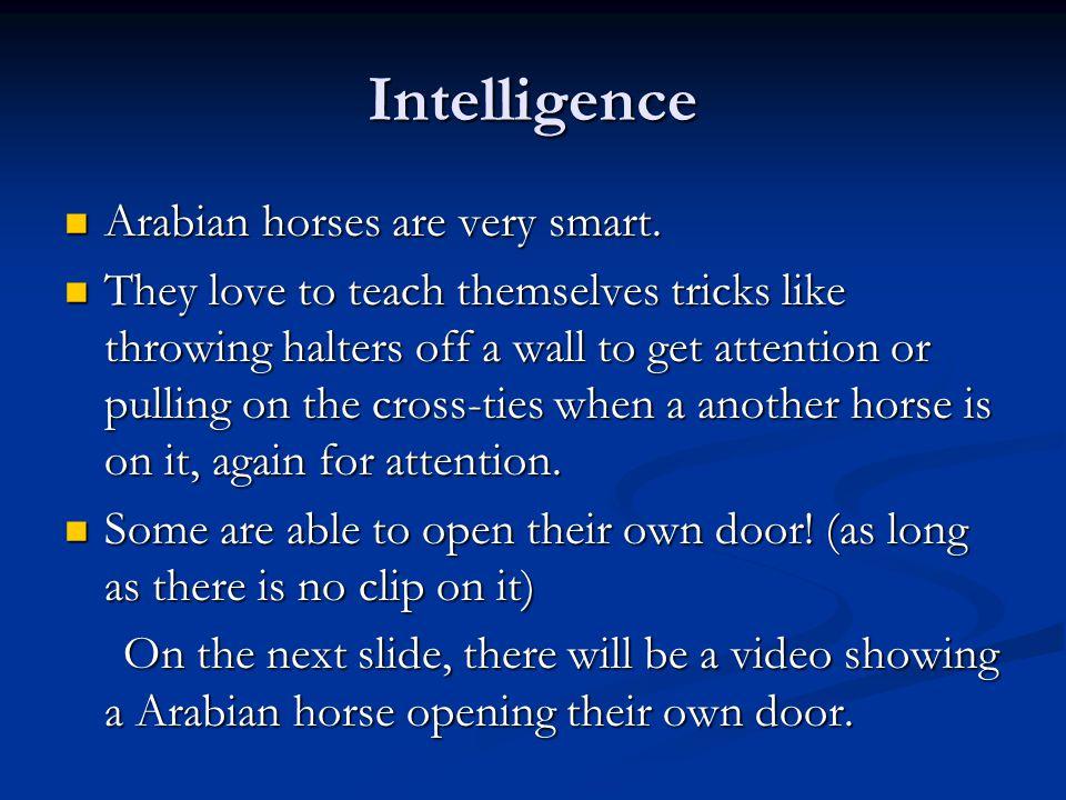 Intelligence Arabian horses are very smart. Arabian horses are very smart.