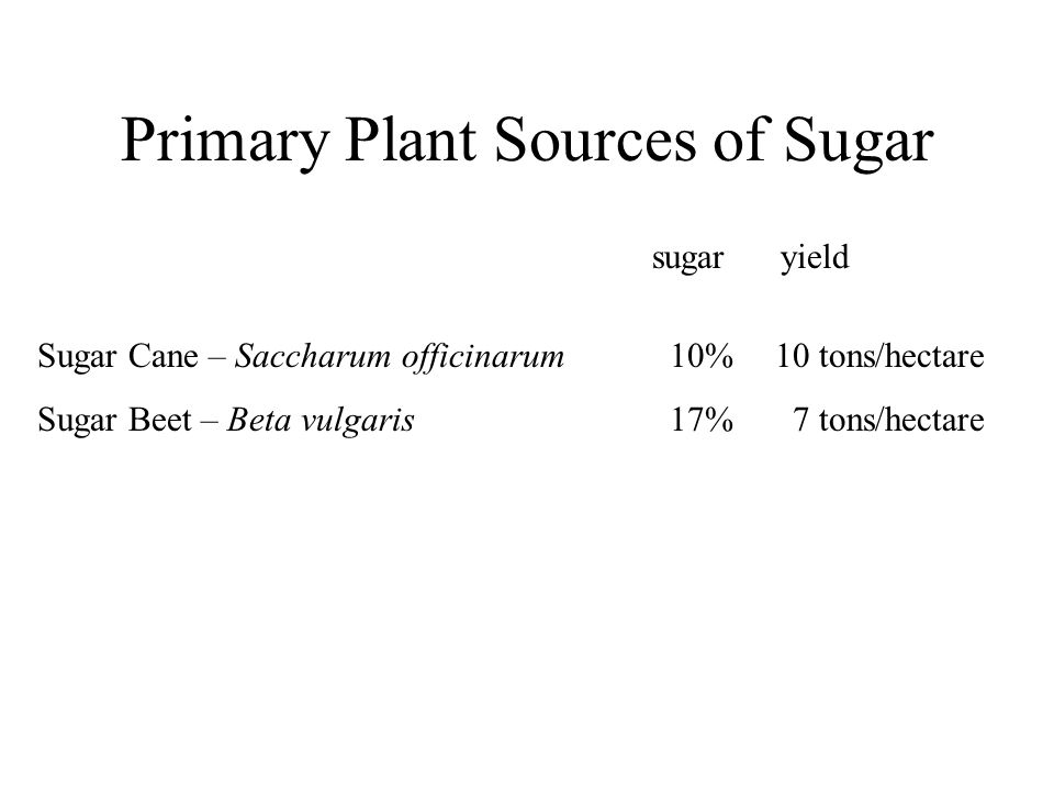 Primary Plant Sources of Sugar Sugar Cane – Saccharum officinarum10%10 tons/hectare Sugar Beet – Beta vulgaris 17% 7 tons/hectare sugar yield