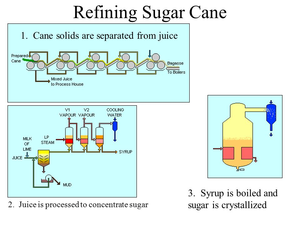Refining Sugar Cane 1. Cane solids are separated from juice 2. Juice is processed to concentrate sugar 3. Syrup is boiled and sugar is crystallized