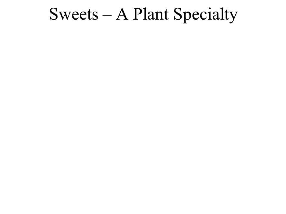Sweets – A Plant Specialty
