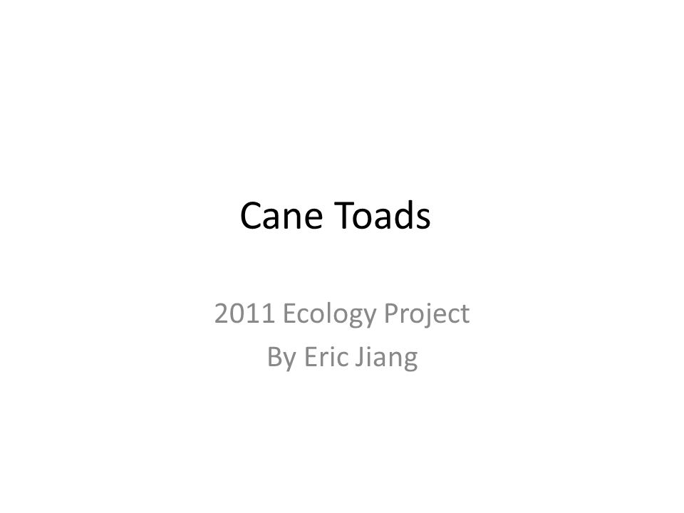 Cane Toads 2011 Ecology Project By Eric Jiang