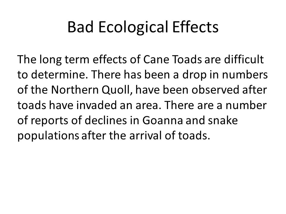 Bad Ecological Effects The long term effects of Cane Toads are difficult to determine. There has been a drop in numbers of the Northern Quoll, have be