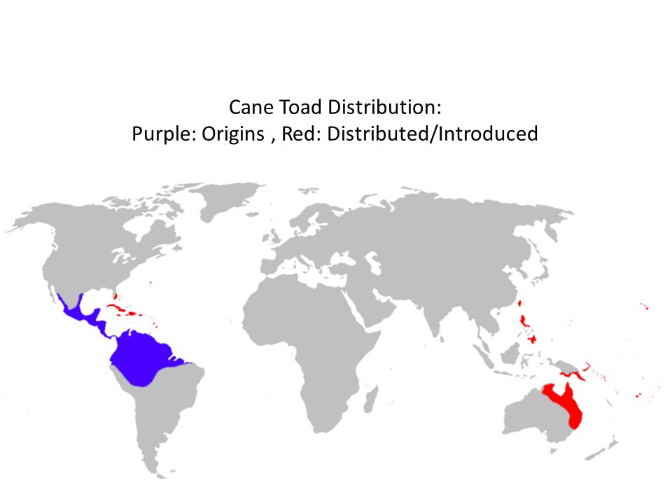 Cane Toad Distribution: Purple: Origins, Red: Distributed/Introduced