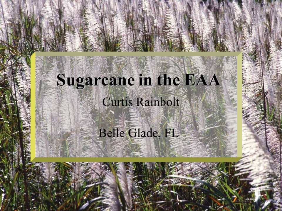 Everglades Agricultural Area Consists of about 500,000 acres of land on the southern and eastern shores of Lake Okeechobee Approximately 80% is sugarcane and the remainder is mostly vegetables, sod, and rice Total sugar acreages are ~450,000 Primarily grown on muck soils, but some is grown on sandy soils