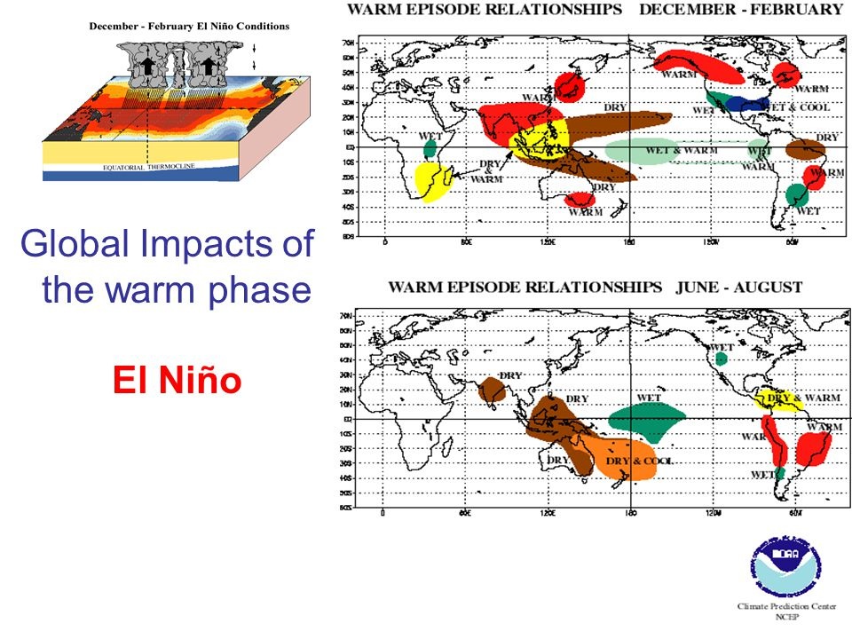 Global Impacts of the warm phase El Niño