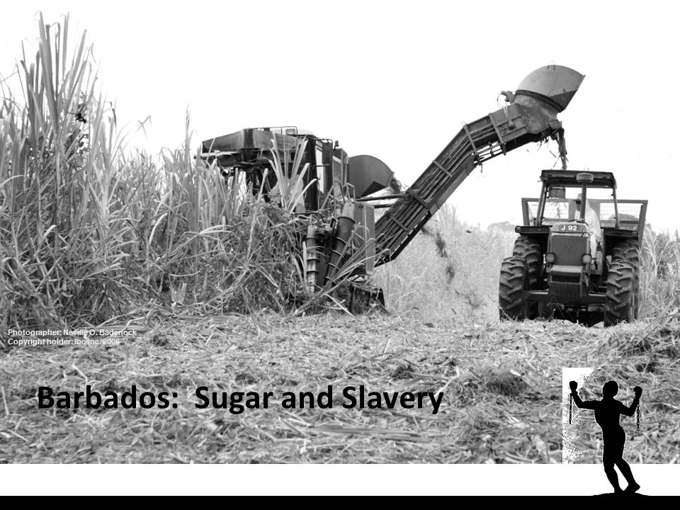 Barbados: Sugar and Slavery Photographer: Neville O. Badenock Copyright holder: Ibo Inc. 2006