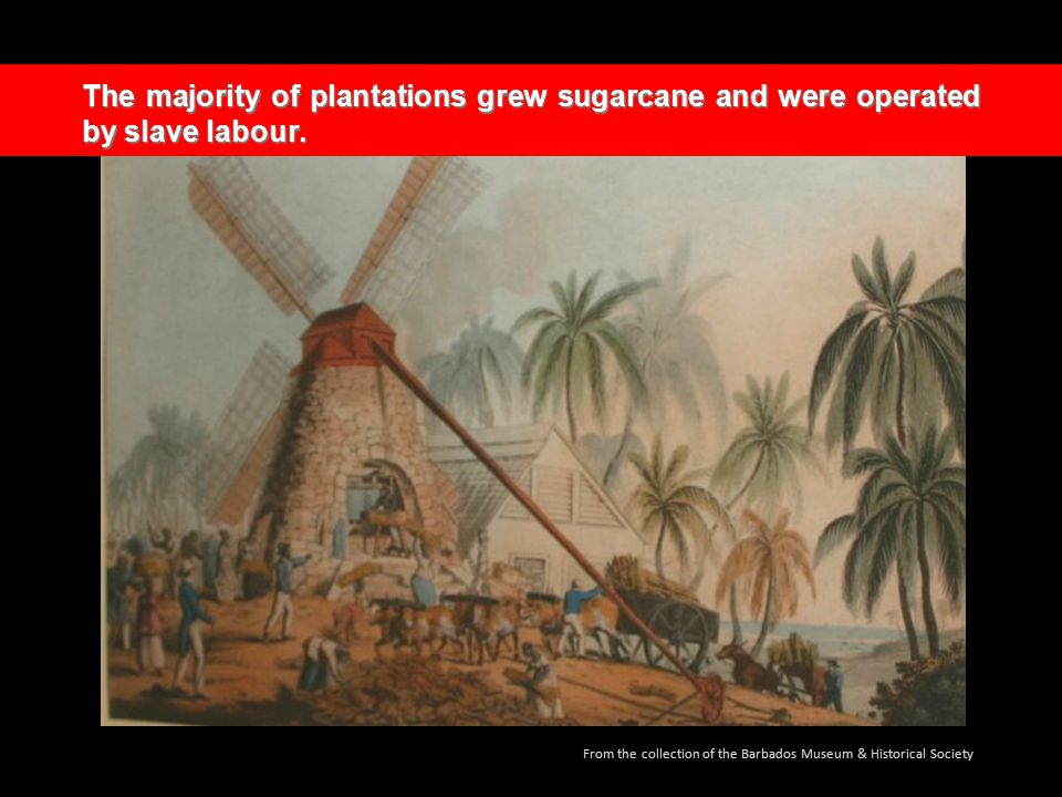 The majority of plantations grew sugarcane and were operated by slave labour.