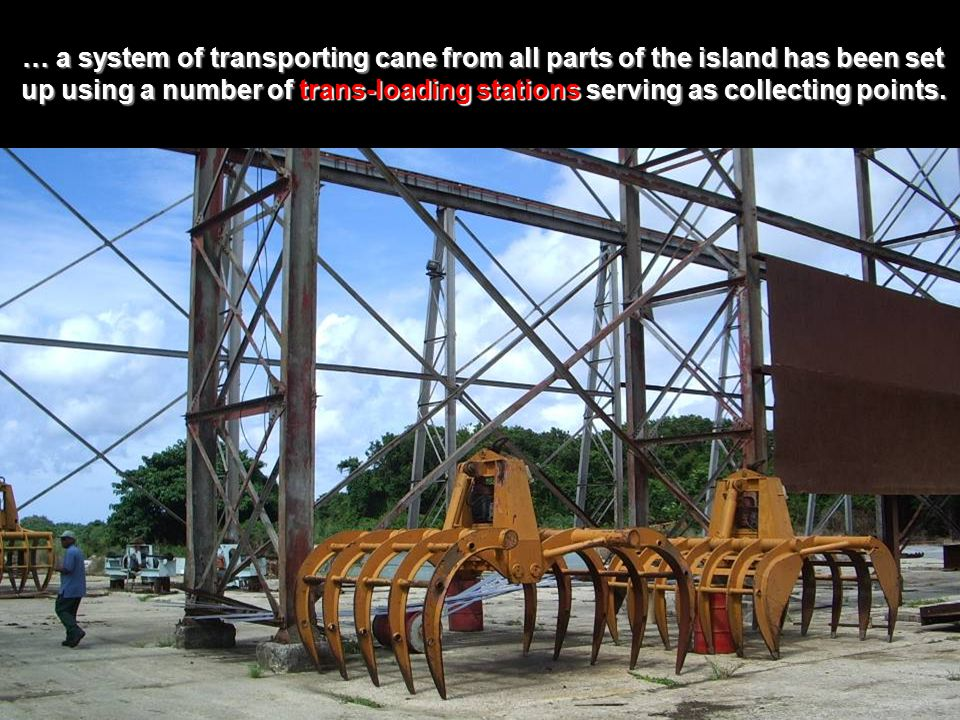 … a system of transporting cane from all parts of the island has been set up using a number of trans-loading stations serving as collecting points.