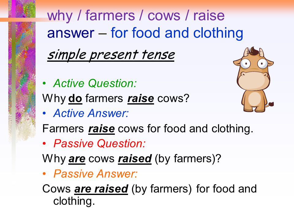 why / farmers / cows / raise answer – for food and clothing simple present tense Active Question: Why do farmers raise cows.