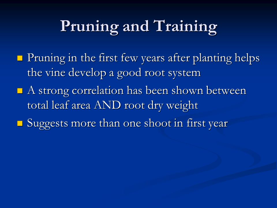 Pruning in the first few years after planting helps the vine develop a good root system Pruning in the first few years after planting helps the vine develop a good root system A strong correlation has been shown between total leaf area AND root dry weight A strong correlation has been shown between total leaf area AND root dry weight Suggests more than one shoot in first year Suggests more than one shoot in first year