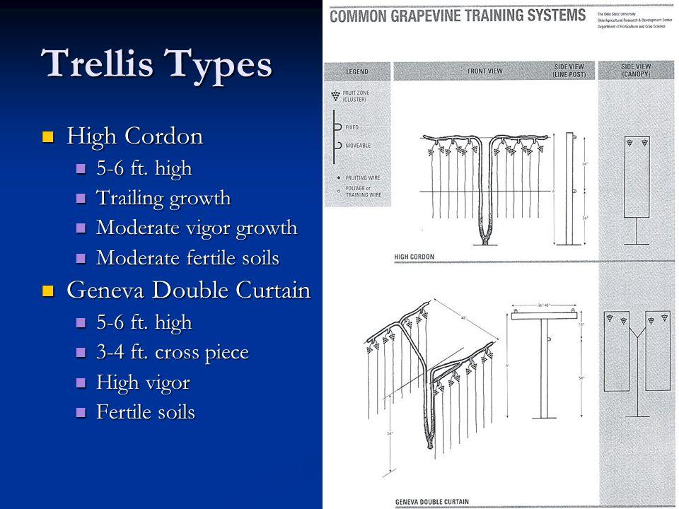 Trellis Types High Cordon High Cordon 5-6 ft. high 5-6 ft.