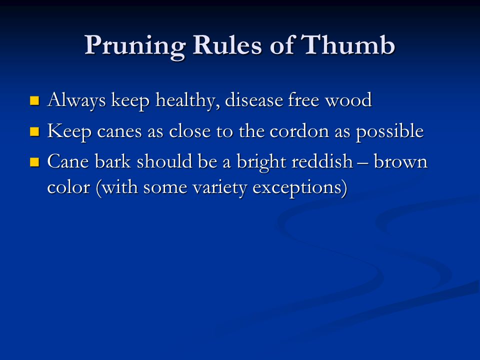 Pruning Rules of Thumb Always keep healthy, disease free wood Always keep healthy, disease free wood Keep canes as close to the cordon as possible Keep canes as close to the cordon as possible Cane bark should be a bright reddish – brown color (with some variety exceptions) Cane bark should be a bright reddish – brown color (with some variety exceptions)