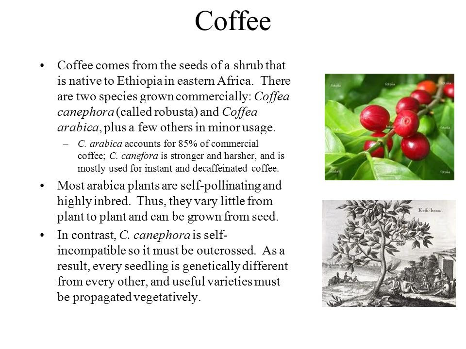 Coffee Coffee comes from the seeds of a shrub that is native to Ethiopia in eastern Africa. There are two species grown commercially: Coffea canephora