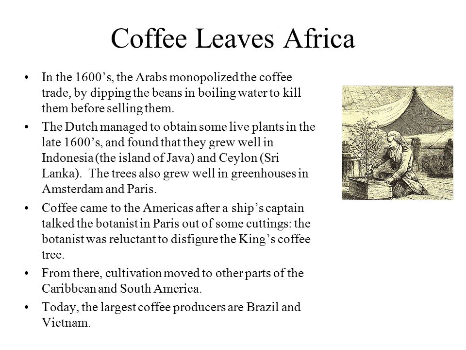 Coffee Leaves Africa In the 1600's, the Arabs monopolized the coffee trade, by dipping the beans in boiling water to kill them before selling them. Th