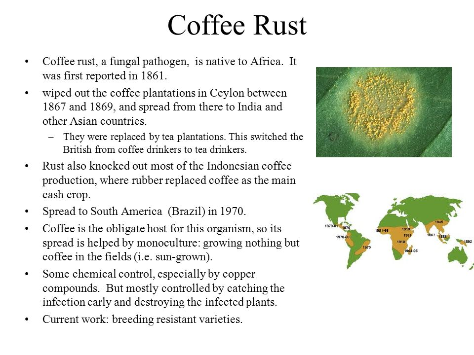 Coffee Rust Coffee rust, a fungal pathogen, is native to Africa. It was first reported in 1861. wiped out the coffee plantations in Ceylon between 186