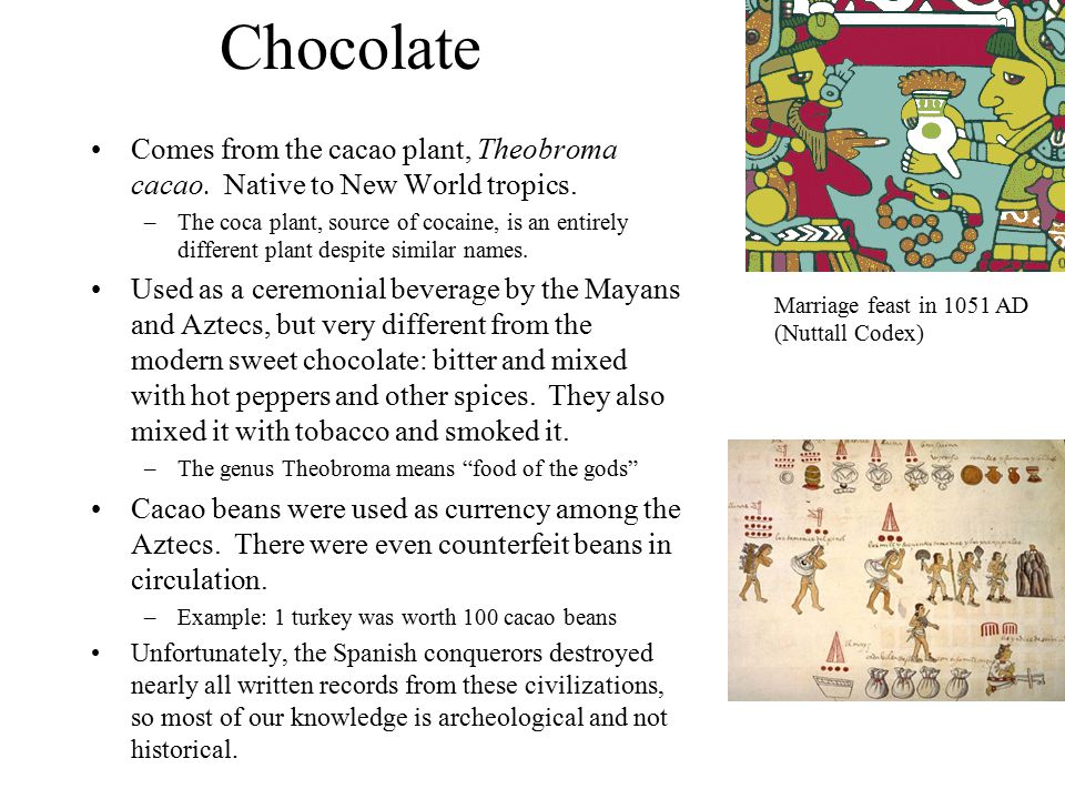 Chocolate Comes from the cacao plant, Theobroma cacao.