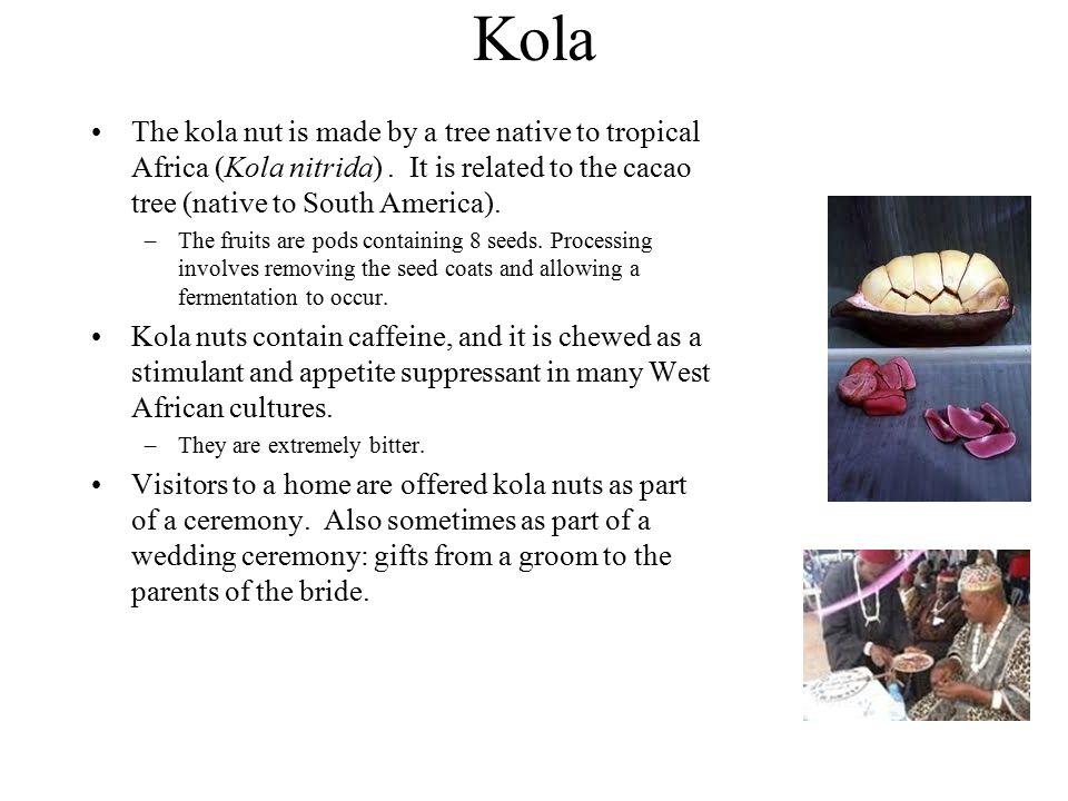 Kola The kola nut is made by a tree native to tropical Africa (Kola nitrida). It is related to the cacao tree (native to South America). –The fruits a