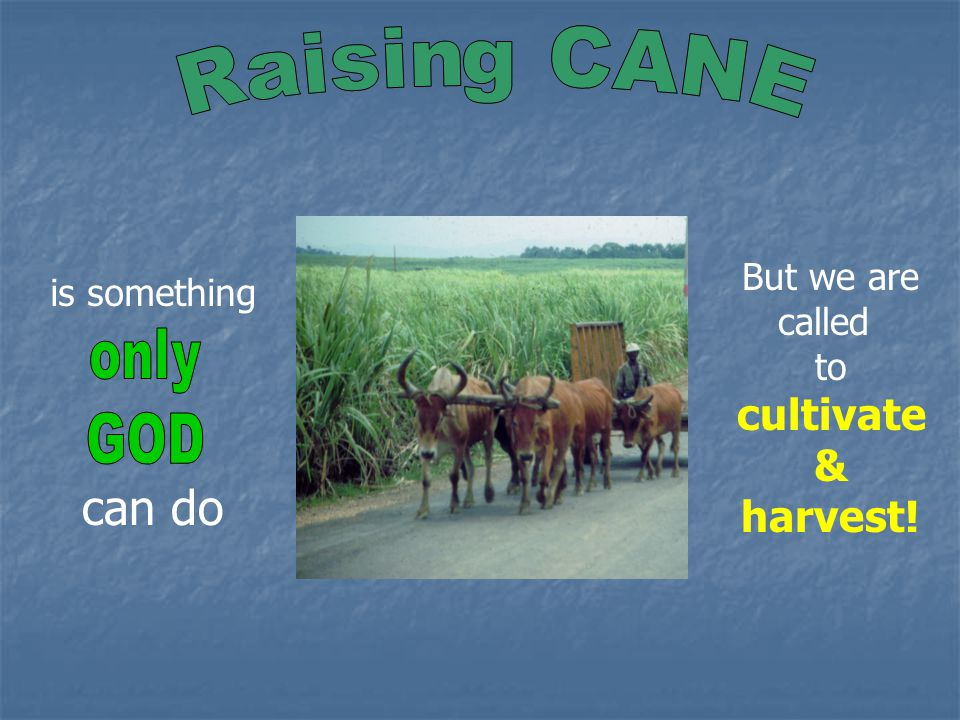 is something But we are called to cultivate & harvest! can do