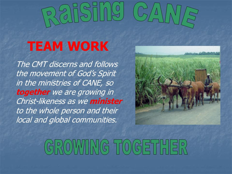 TEAM WORK The CMT discerns and follows the movement of God's Spirit in the ministries of CANE, so together we are growing in Christ-likeness as we minister to the whole person and their local and global communities.