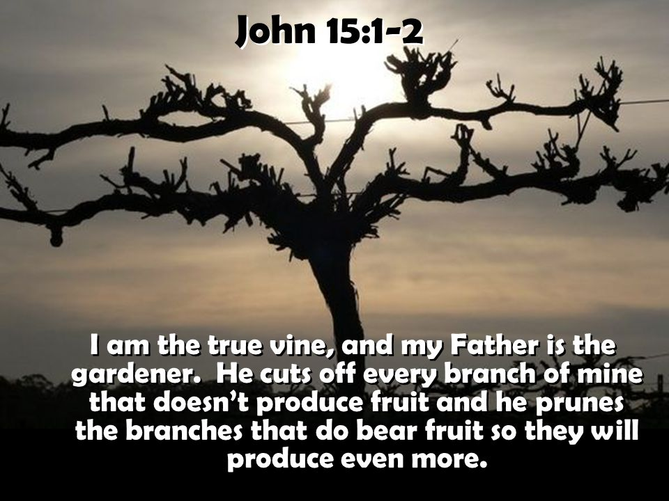 John 15:1-2 I am the true vine, and my Father is the gardener.