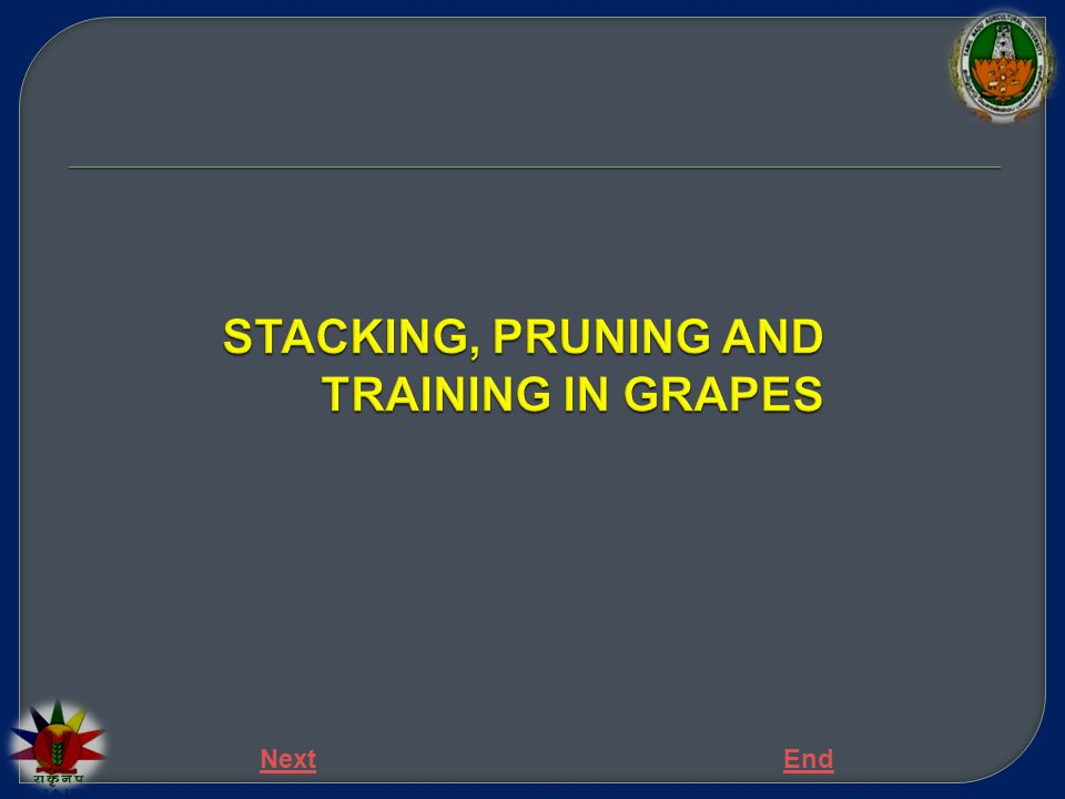 Training and pruning in grapes Training  Being a vine crop, training is essential for grapes.