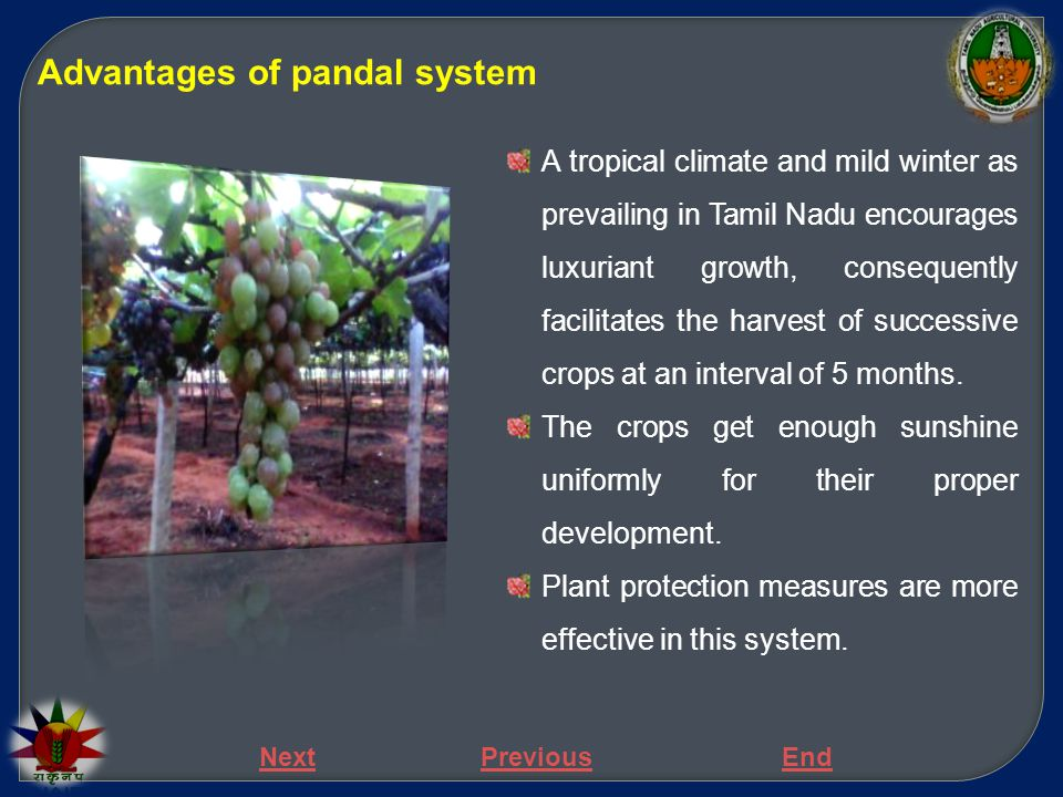 Advantages of pandal system A tropical climate and mild winter as prevailing in Tamil Nadu encourages luxuriant growth, consequently facilitates the h