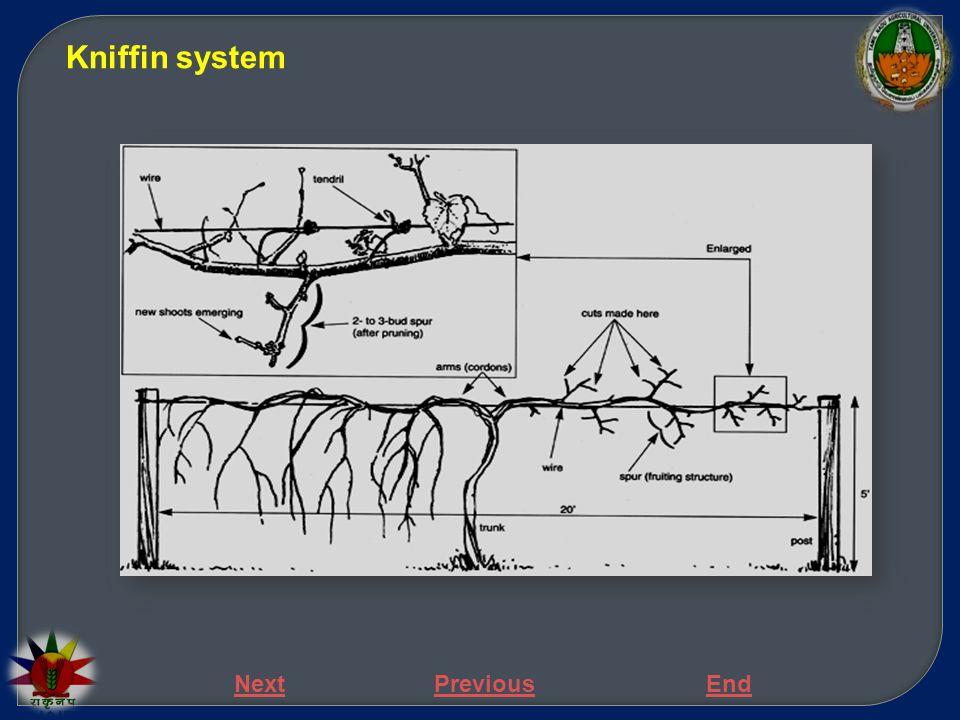 NextPreviousEnd  A four-cane system named after Mr.