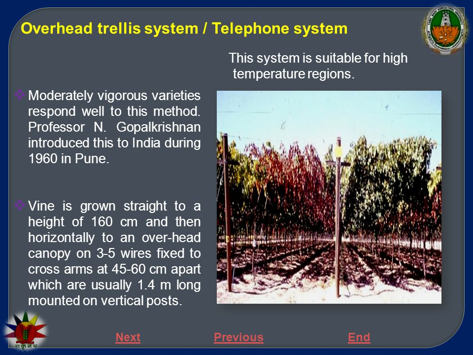 Overhead trellis system / Telephone system  Moderately vigorous varieties respond well to this method. Professor N. Gopalkrishnan introduced this to