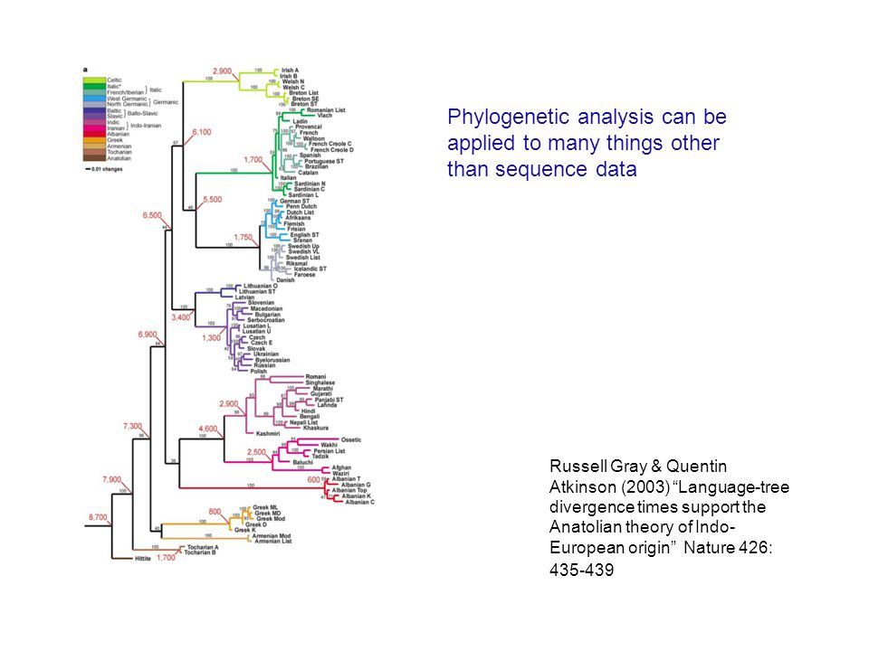 Russell Gray & Quentin Atkinson (2003) Language-tree divergence times support the Anatolian theory of Indo- European origin Nature 426: 435-439 Phylogenetic analysis can be applied to many things other than sequence data