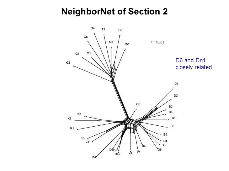 NeighborNet of Section 2 D6 and Dn1 closely related