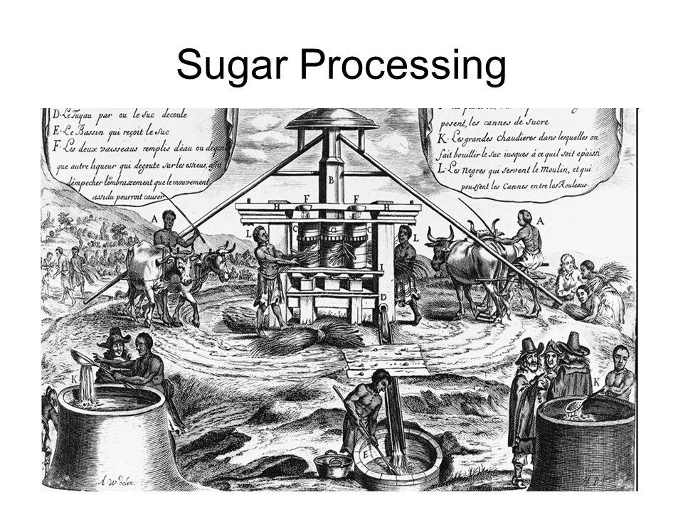 Sugar Processing