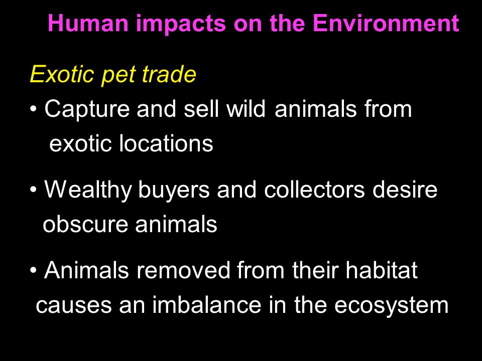 Human impacts on the Environment Exotic pet trade Capture and sell wild animals from exotic locations Wealthy buyers and collectors desire obscure animals Animals removed from their habitat causes an imbalance in the ecosystem
