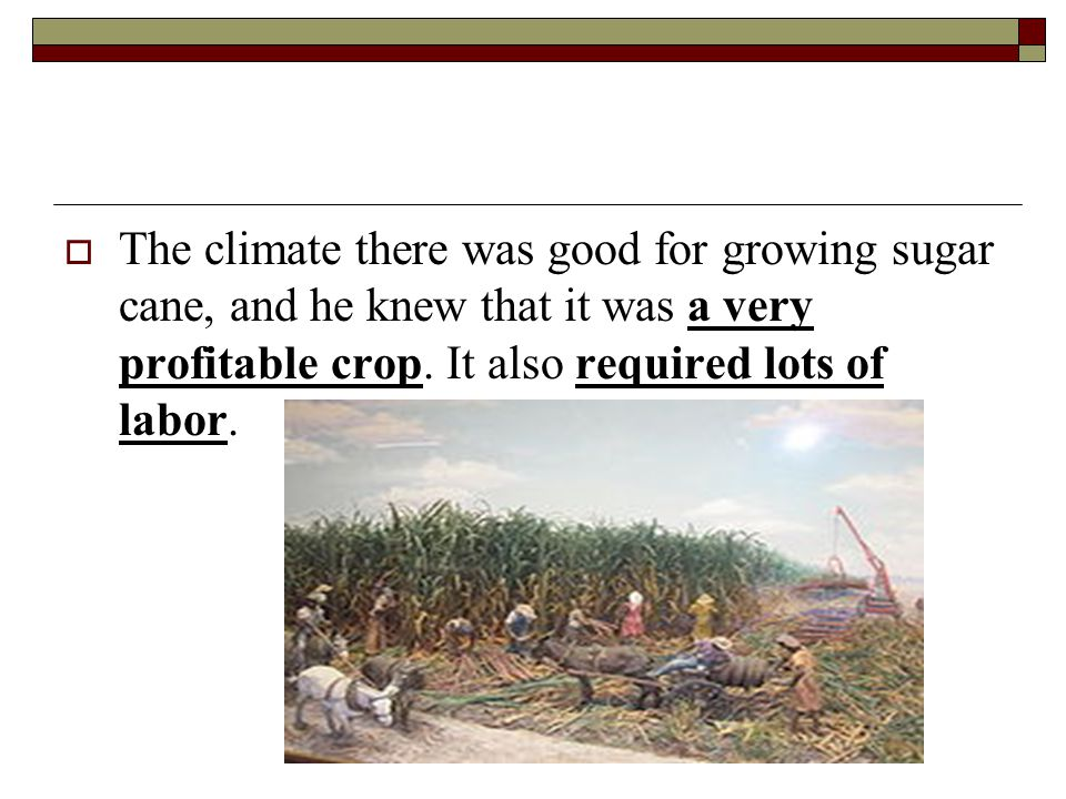  The climate there was good for growing sugar cane, and he knew that it was a very profitable crop.
