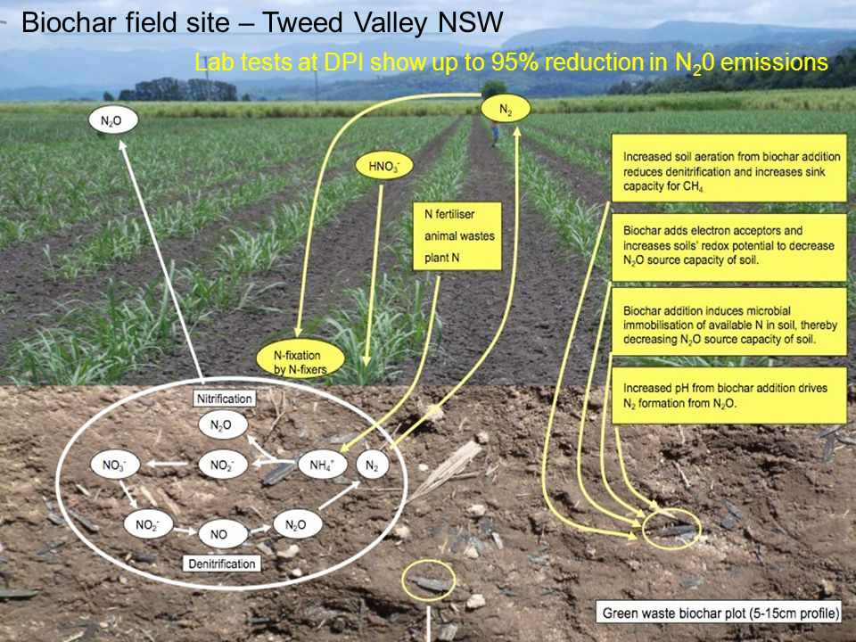 Biochar field site – Tweed Valley NSW Lab tests at DPI show up to 95% reduction in N 2 0 emissions