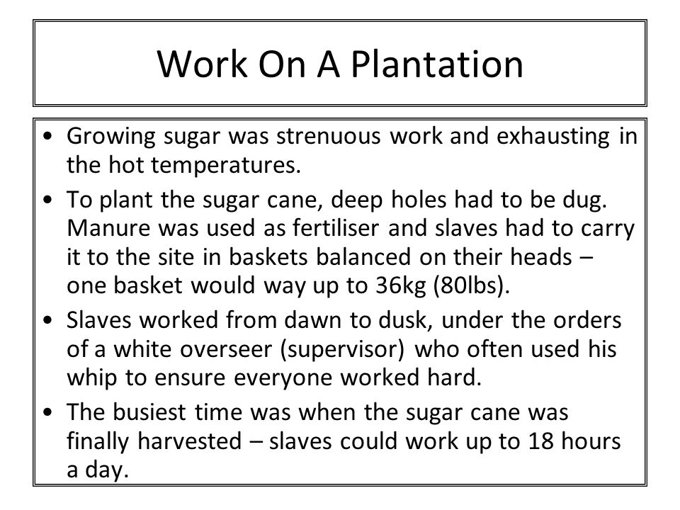 Work On A Plantation Growing sugar was strenuous work and exhausting in the hot temperatures. To plant the sugar cane, deep holes had to be dug. Manur