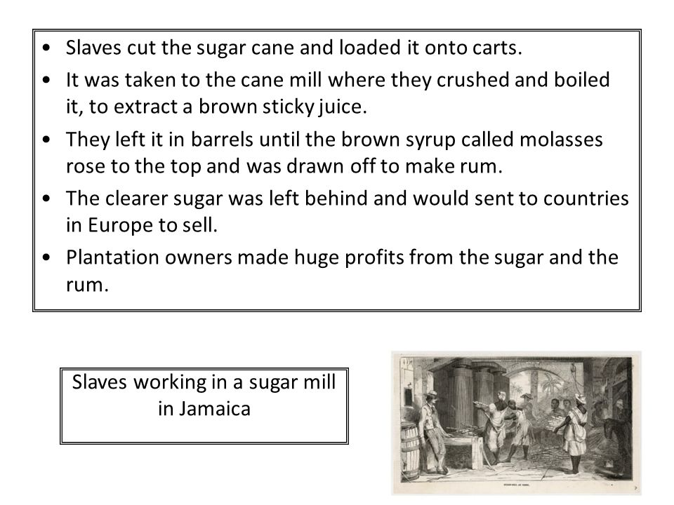 Slaves cut the sugar cane and loaded it onto carts. It was taken to the cane mill where they crushed and boiled it, to extract a brown sticky juice. T