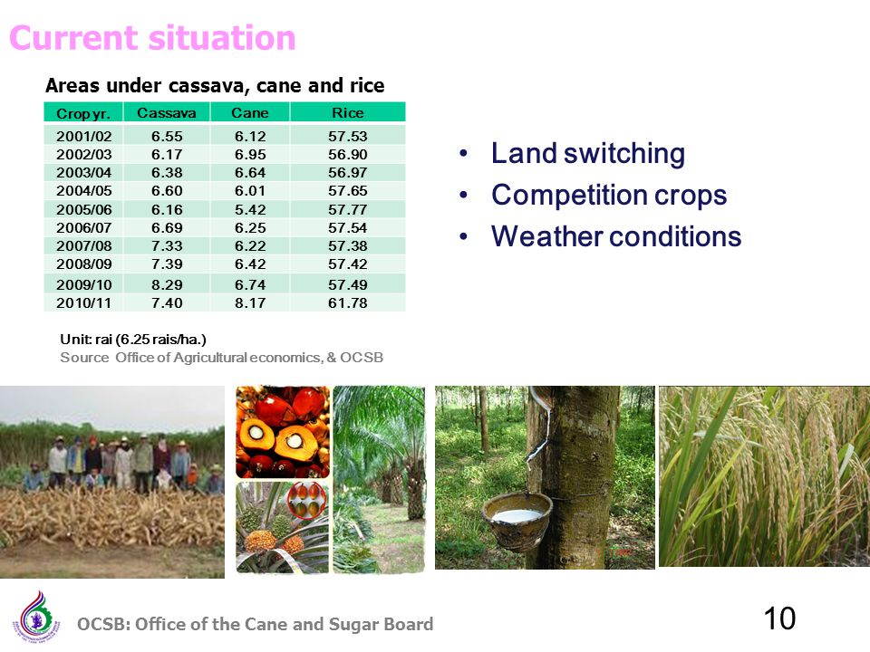 10 Areas under cassava, cane and rice Land switching Competition crops Weather conditions Crop yr.CassavaCaneRice 2001/026.556.1257.53 2002/036.176.9556.90 2003/046.386.6456.97 2004/056.606.0157.65 2005/066.165.4257.77 2006/076.696.2557.54 2007/087.336.2257.38 2008/097.396.4257.42 2009/108.296.7457.49 2010/117.408.1761.78 Current situation Unit: rai (6.25 rais/ha.) Source Office of Agricultural economics, & OCSB OCSB: Office of the Cane and Sugar Board