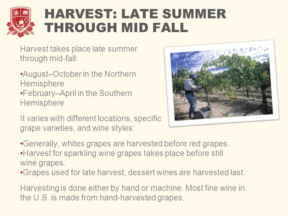 HARVEST: LATE SUMMER THROUGH MID FALL Harvest takes place late summer through mid-fall: August–October in the Northern Hemisphere February–April in the Southern Hemisphere It varies with different locations, specific grape varieties, and wine styles: Generally, whites grapes are harvested before red grapes.