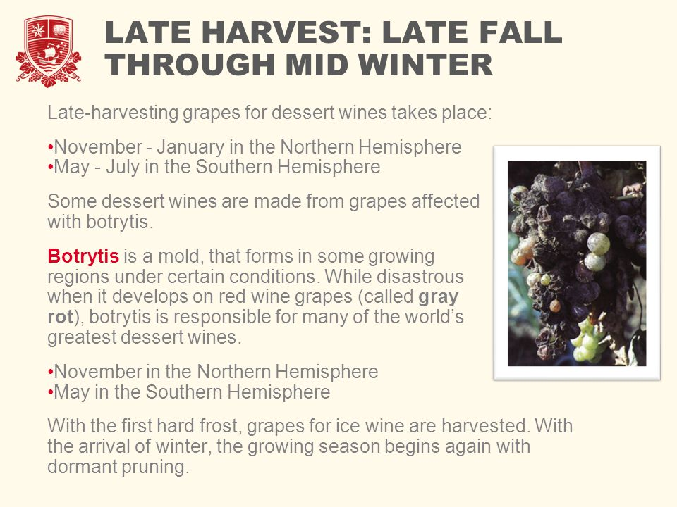 LATE HARVEST: LATE FALL THROUGH MID WINTER Late-harvesting grapes for dessert wines takes place: November - January in the Northern Hemisphere May - July in the Southern Hemisphere Some dessert wines are made from grapes affected with botrytis.