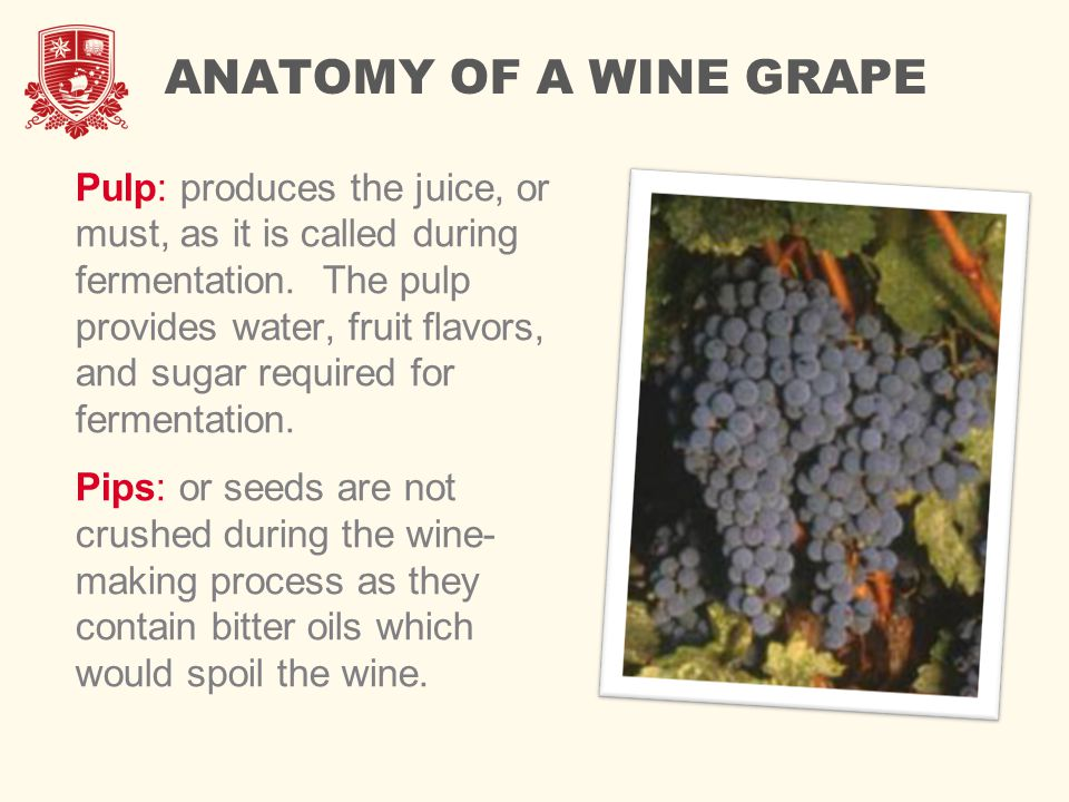 ANATOMY OF A WINE GRAPE Pulp: produces the juice, or must, as it is called during fermentation.