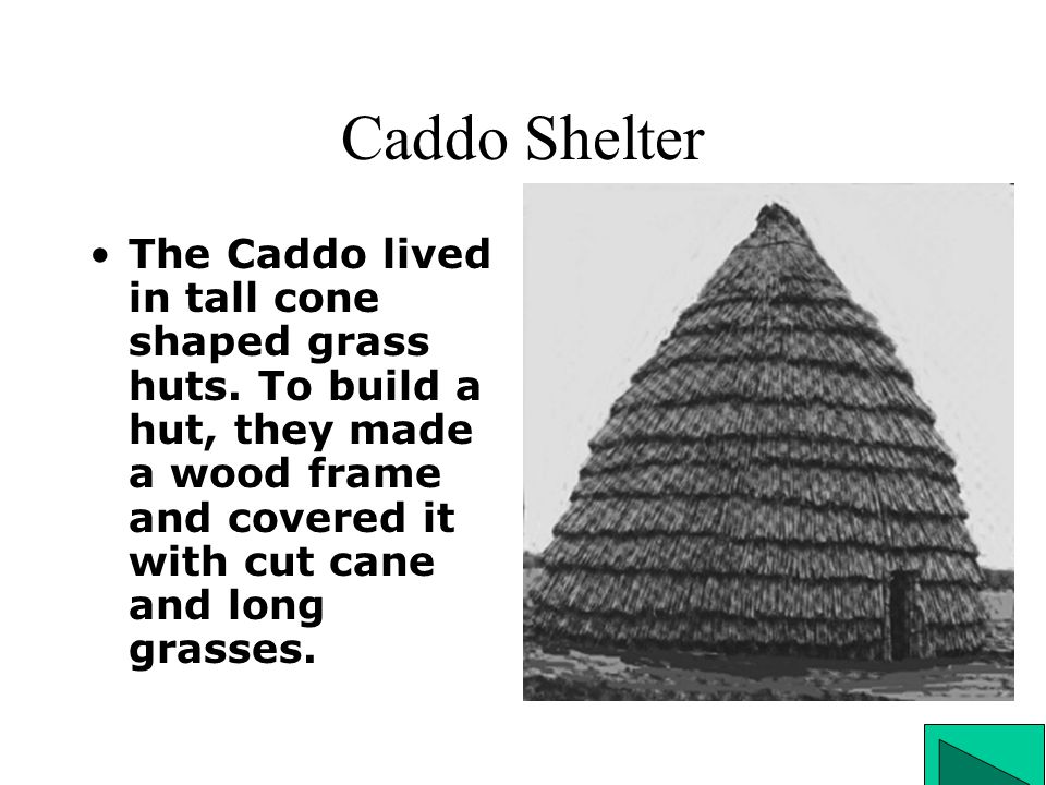Caddo Shelter The Caddo lived in tall cone shaped grass huts. To build a hut, they made a wood frame and covered it with cut cane and long grasses.