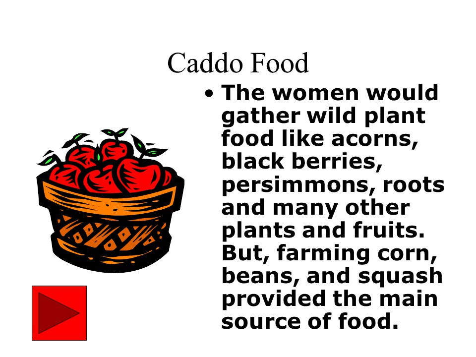 Caddo Food The women would gather wild plant food like acorns, black berries, persimmons, roots and many other plants and fruits.