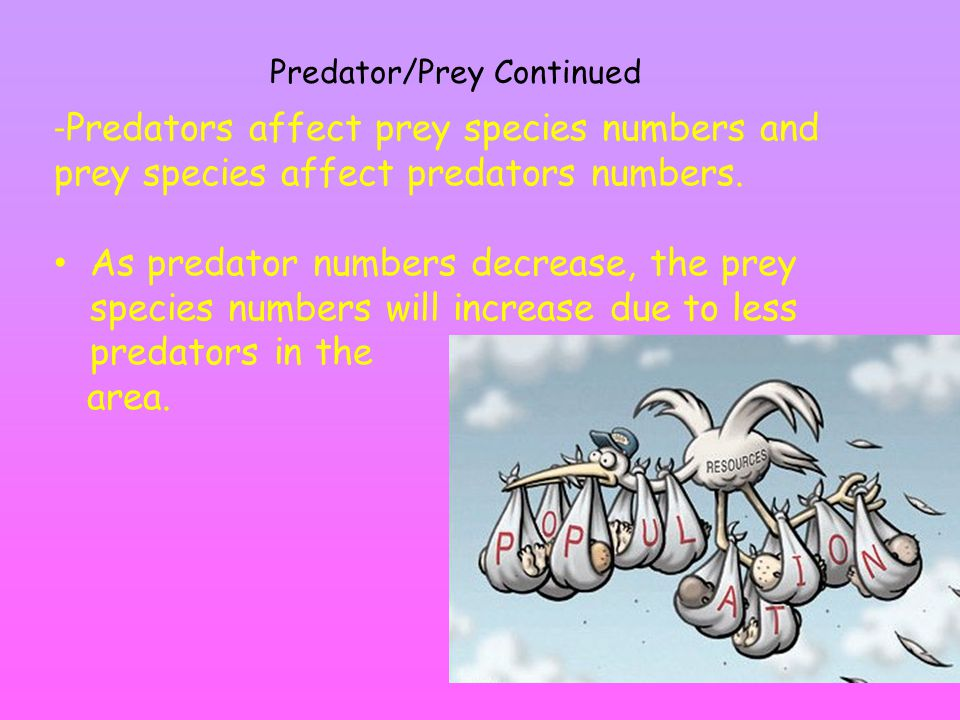 Predator/Prey Continued - Predators affect prey species numbers and prey species affect predators numbers.