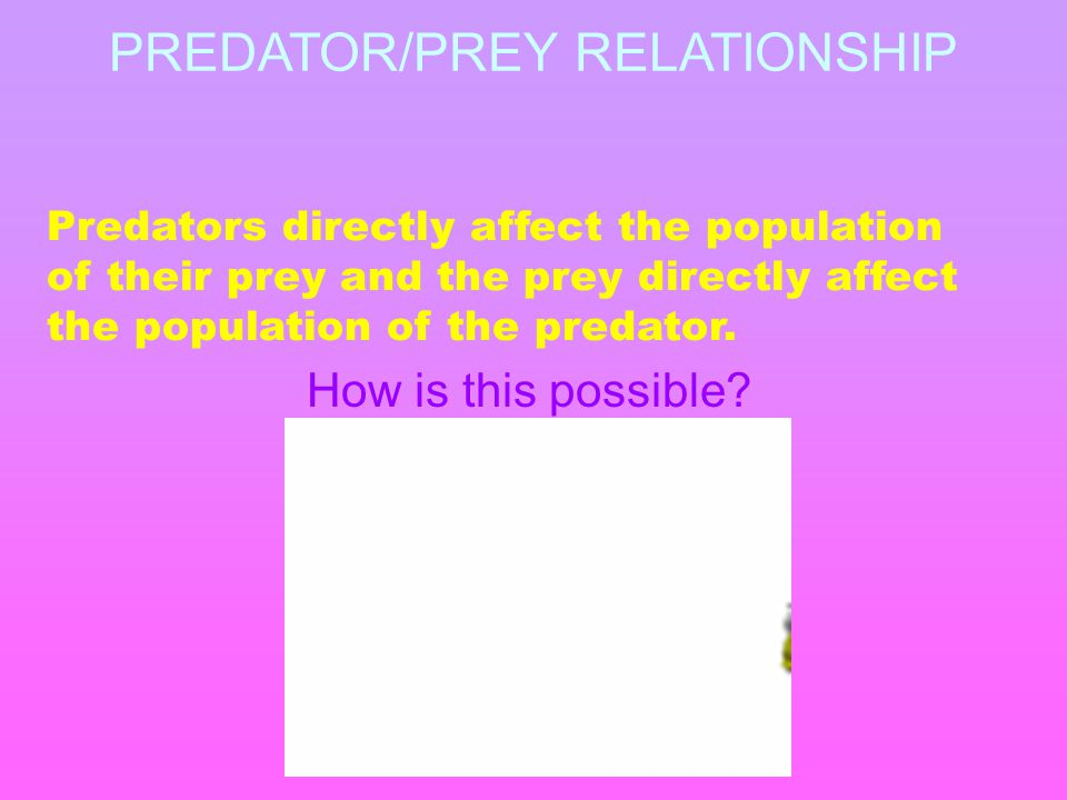 PREDATOR/PREY RELATIONSHIP Predators directly affect the population of their prey and the prey directly affect the population of the predator.