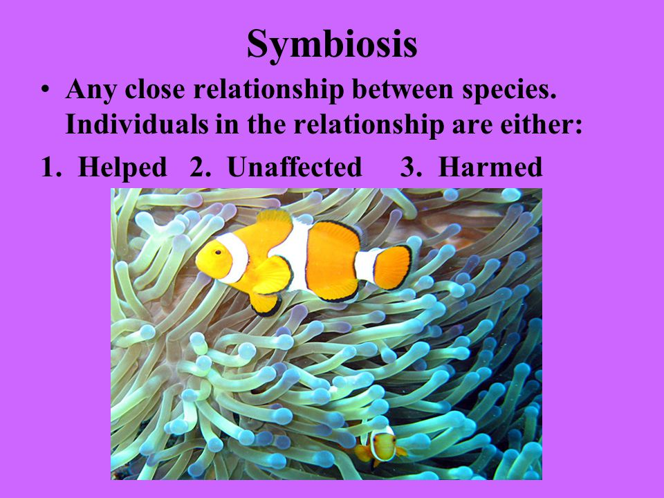 Symbiosis Any close relationship between species. Individuals in the relationship are either: 1.