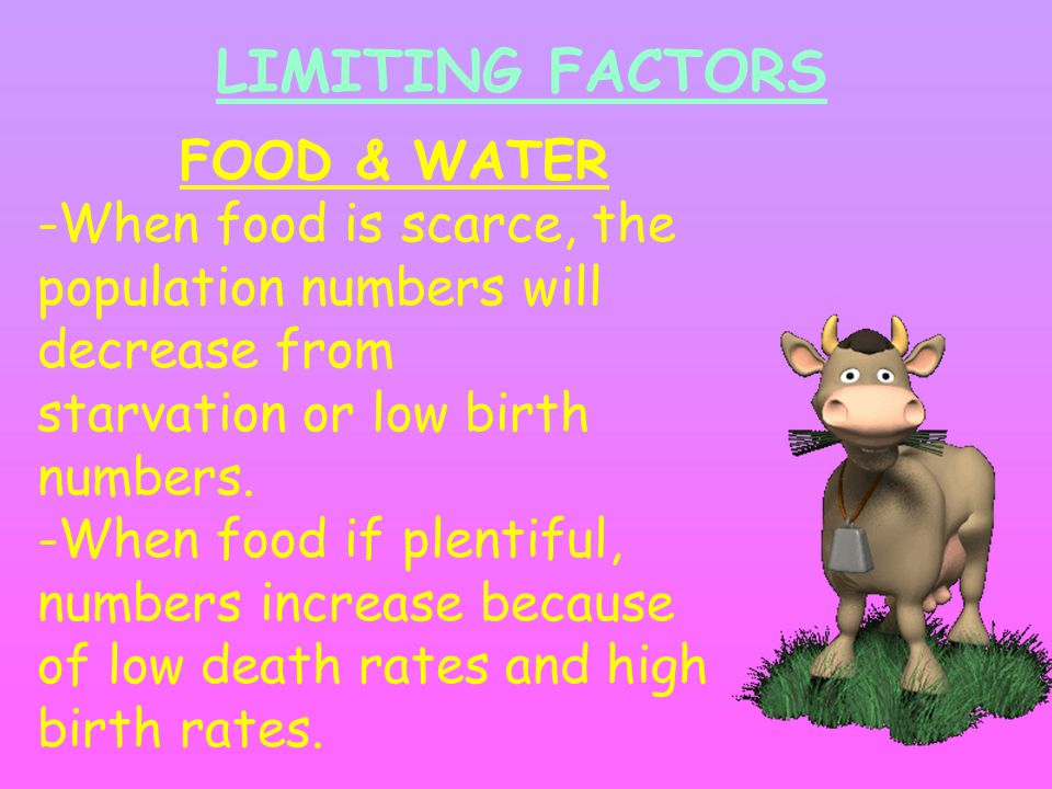 LIMITING FACTORS FOOD & WATER -When food is scarce, the population numbers will decrease from starvation or low birth numbers. -When food if plentiful