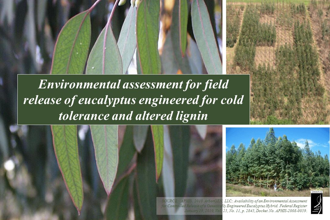 SOURCE: APHIS. 2010. ArborGEN, LLC; Availability of an Environmental Assessment for Controlled Release of a Genetically Engineered Eucalyptus Hybrid.