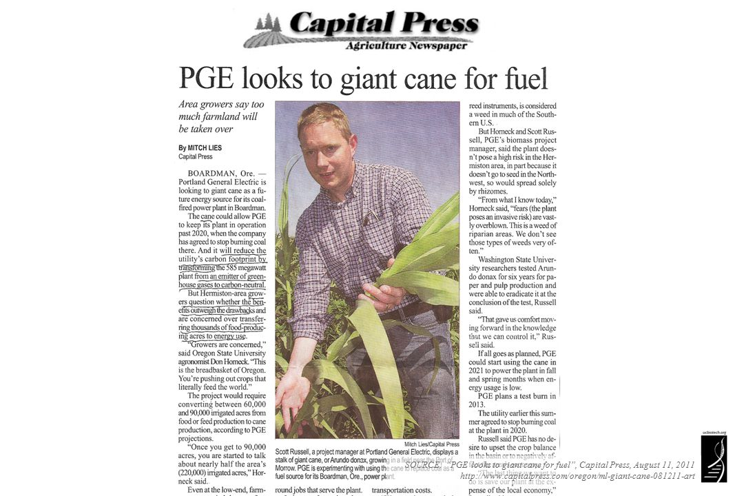 "SOURCE: ""PGE looks to giant cane for fuel"", Capital Press, August 11, 2011 http://www.capitalpress.com/oregon/ml-giant-cane-081211-art"