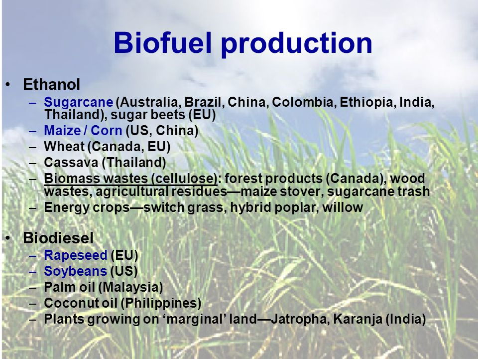 Biofuel production Ethanol –Sugarcane (Australia, Brazil, China, Colombia, Ethiopia, India, Thailand), sugar beets (EU) –Maize / Corn (US, China) –Wheat (Canada, EU) –Cassava (Thailand) –Biomass wastes (cellulose): forest products (Canada), wood wastes, agricultural residues—maize stover, sugarcane trash –Energy crops—switch grass, hybrid poplar, willow Biodiesel –Rapeseed (EU) –Soybeans (US) –Palm oil (Malaysia) –Coconut oil (Philippines) –Plants growing on 'marginal' land—Jatropha, Karanja (India)