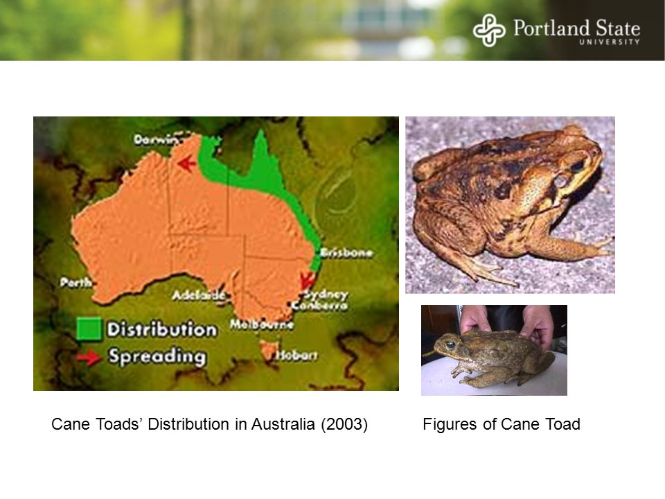 Figures of Cane ToadCane Toads' Distribution in Australia (2003)